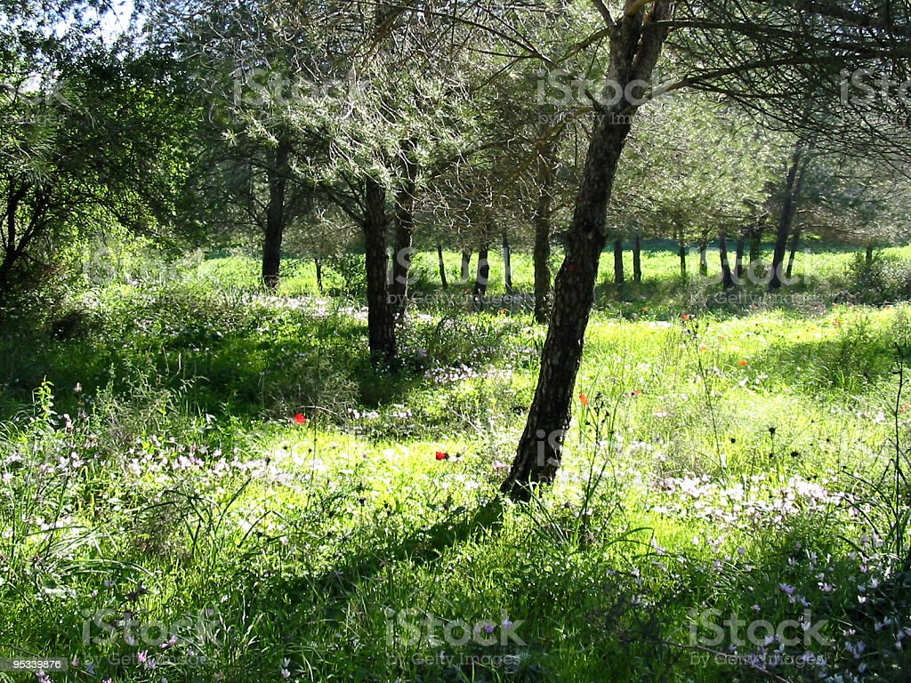Blooming flowering forest royalty-free stock photo
