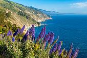 Blooming flowers along coastline of Big Sur, California, USA.
