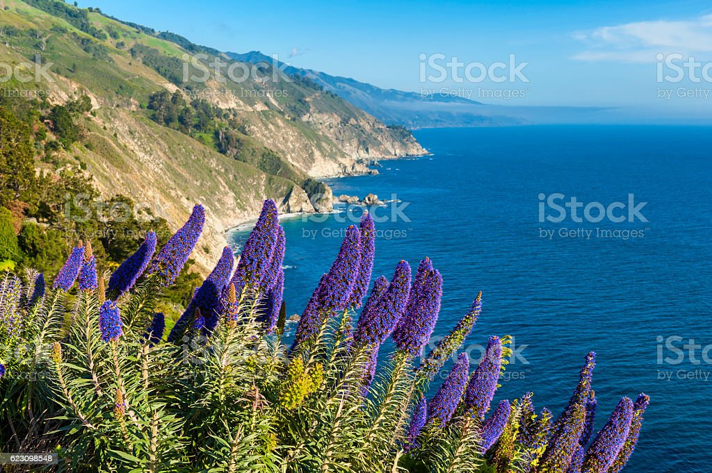 Blooming flowers in Big Sur California stock photo