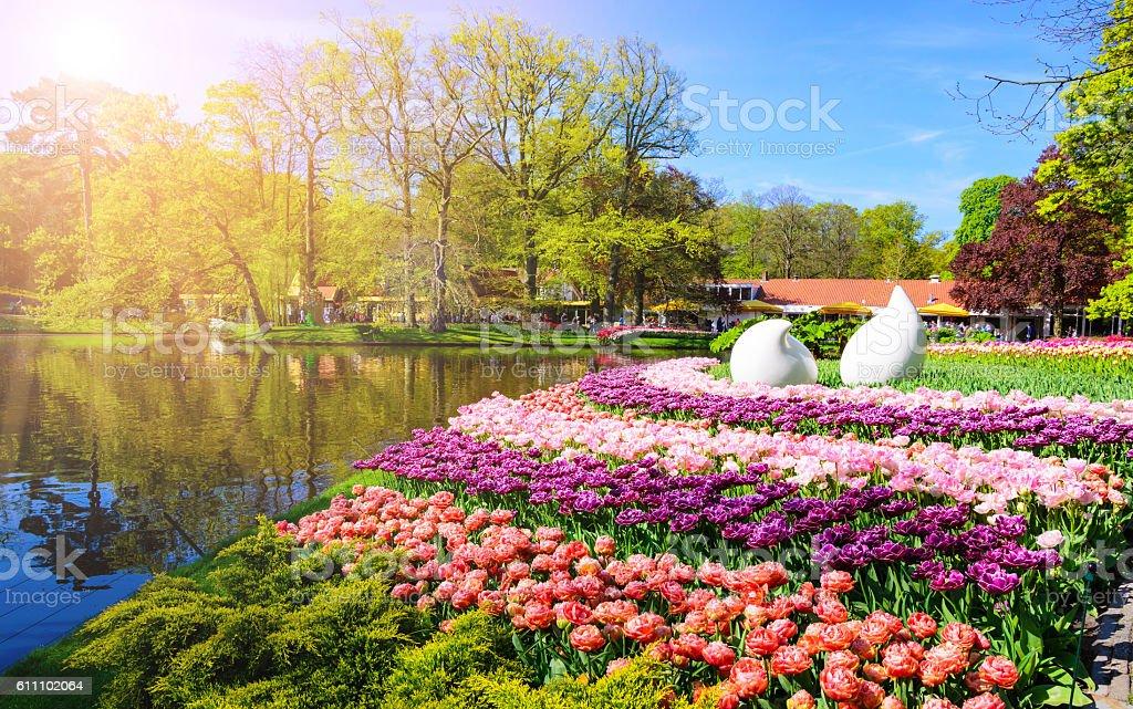 Blooming flowers in Keukenhof park in Netherlands, Europe. stock photo