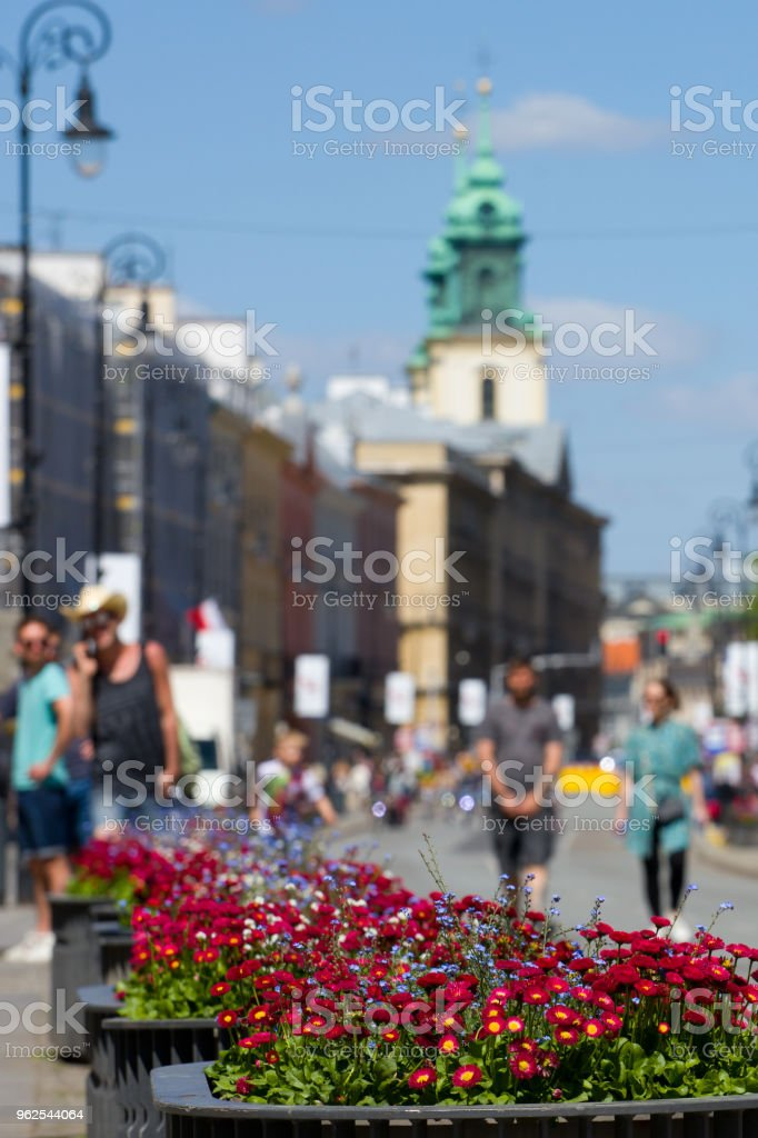 Blooming flowers in Warsaw. - Royalty-free Adult Stock Photo