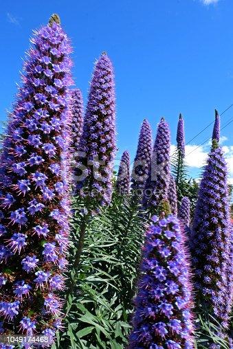 Flowers in New-Zealand
