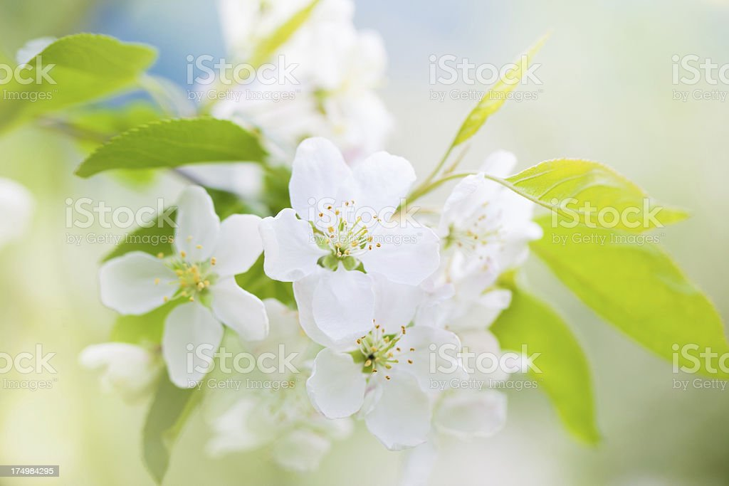 Blooming flowers royalty-free stock photo