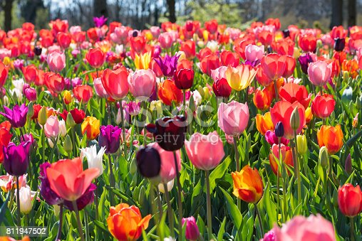 Colorful blooming-flowers in the field.