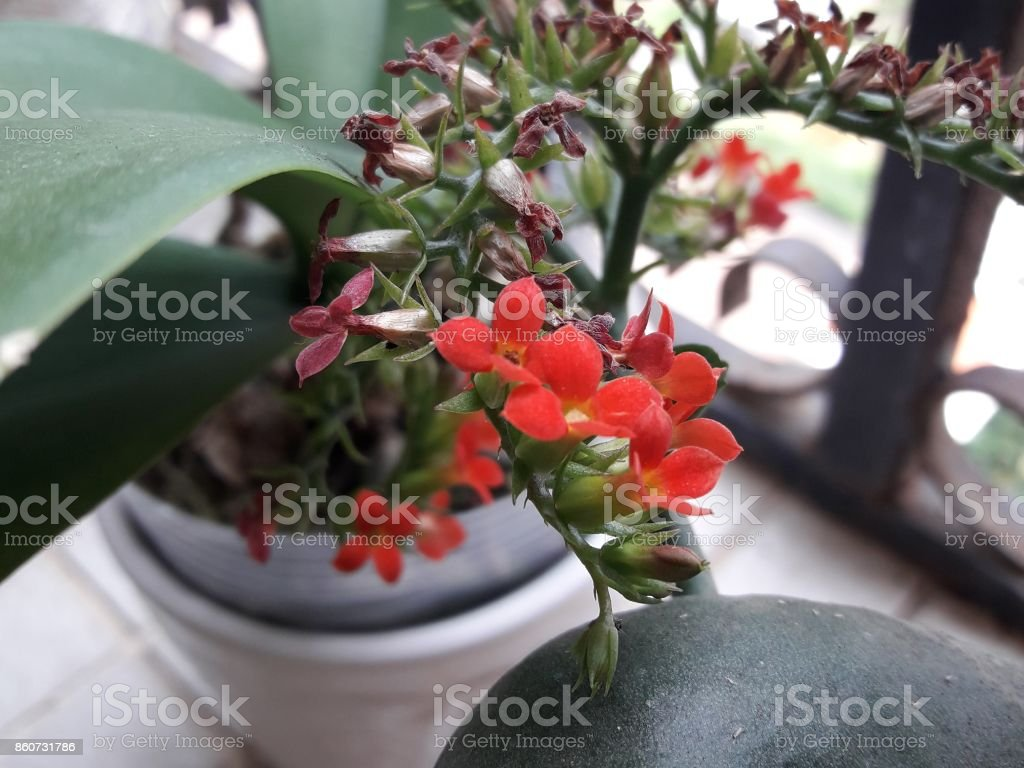 Blooming flowers stock photo