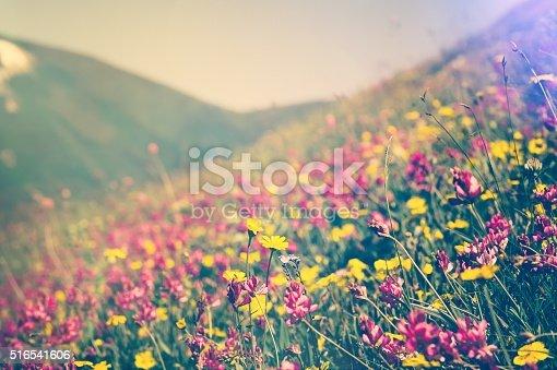 istock Blooming Flowers Spring Summer seasons natural Background 516541606