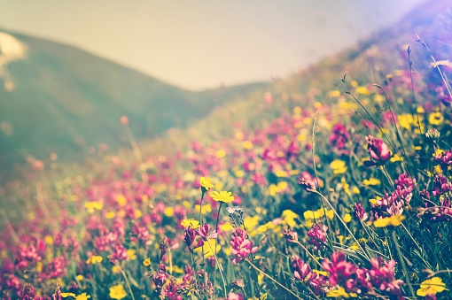 istock Blooming Flowers Spring Summer seasons natural Background 516541606