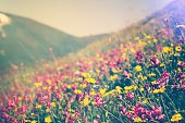Blooming Flowers Spring Summer seasons natural Background trendy colors