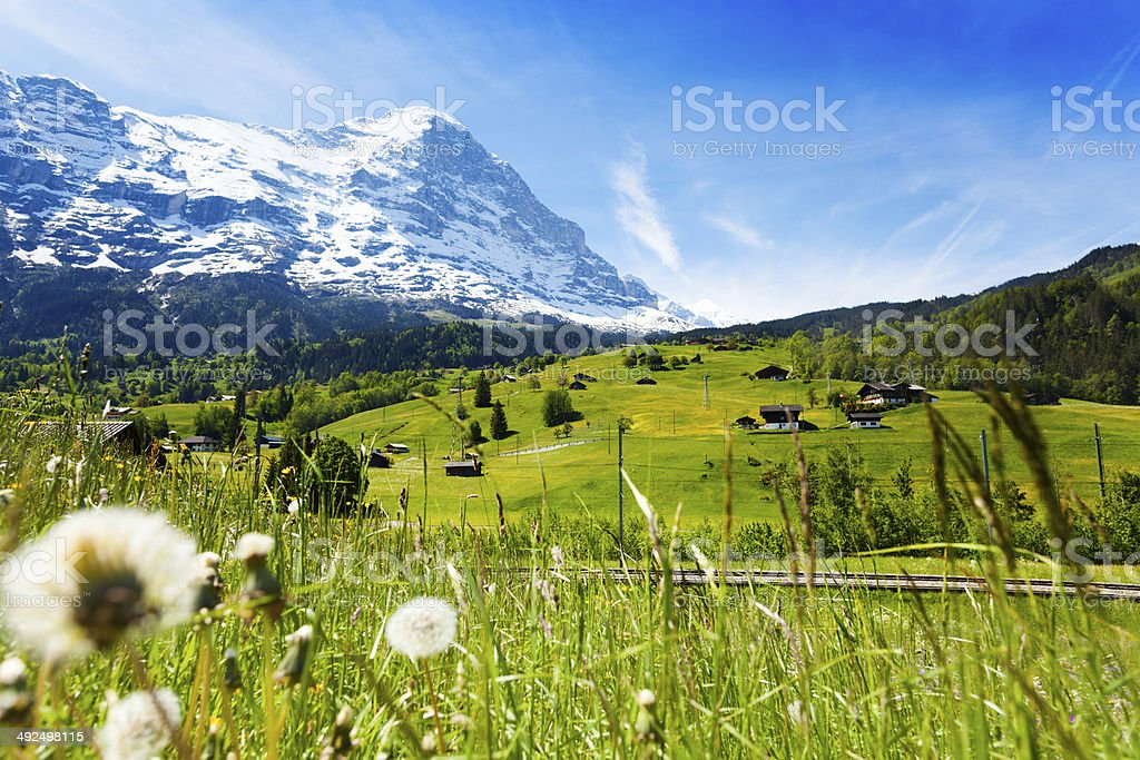 Blooming flowers with beautiful Swiss landscape stock photo