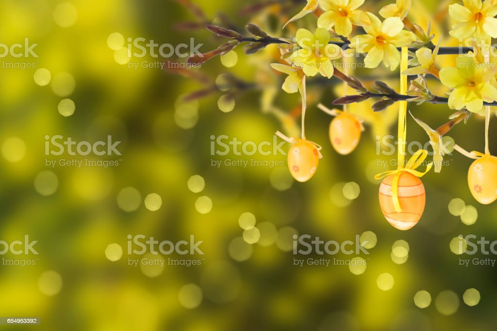 blooming Forsythia twigs with easter eggs stock photo