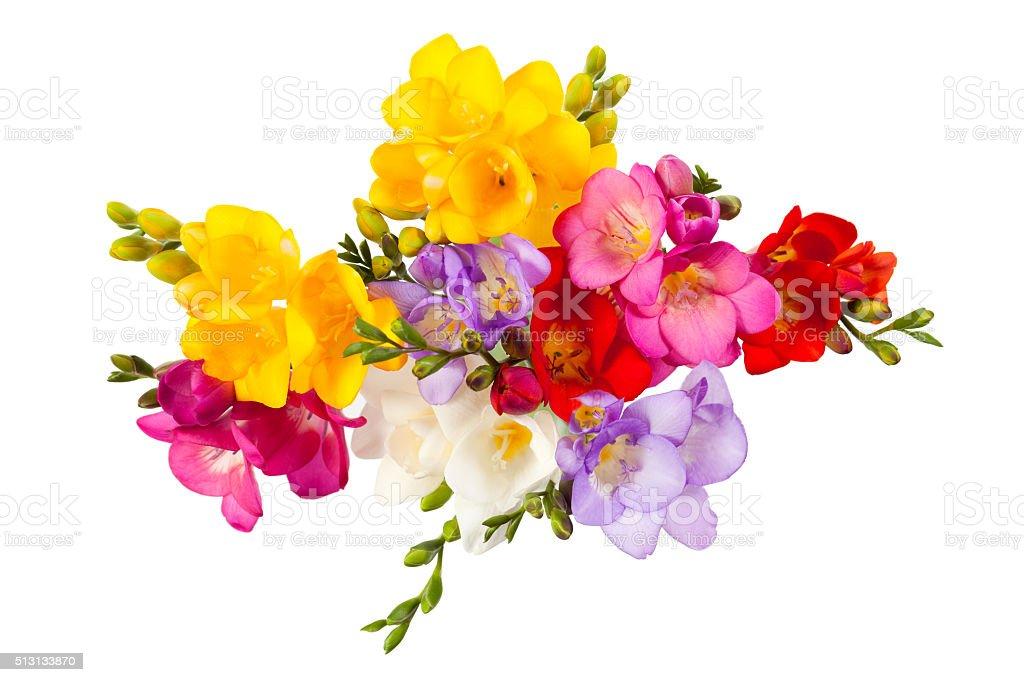 Blooming Freesia圖像檔