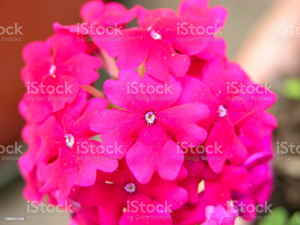 Blooming Fresh Colored Flower stock photo