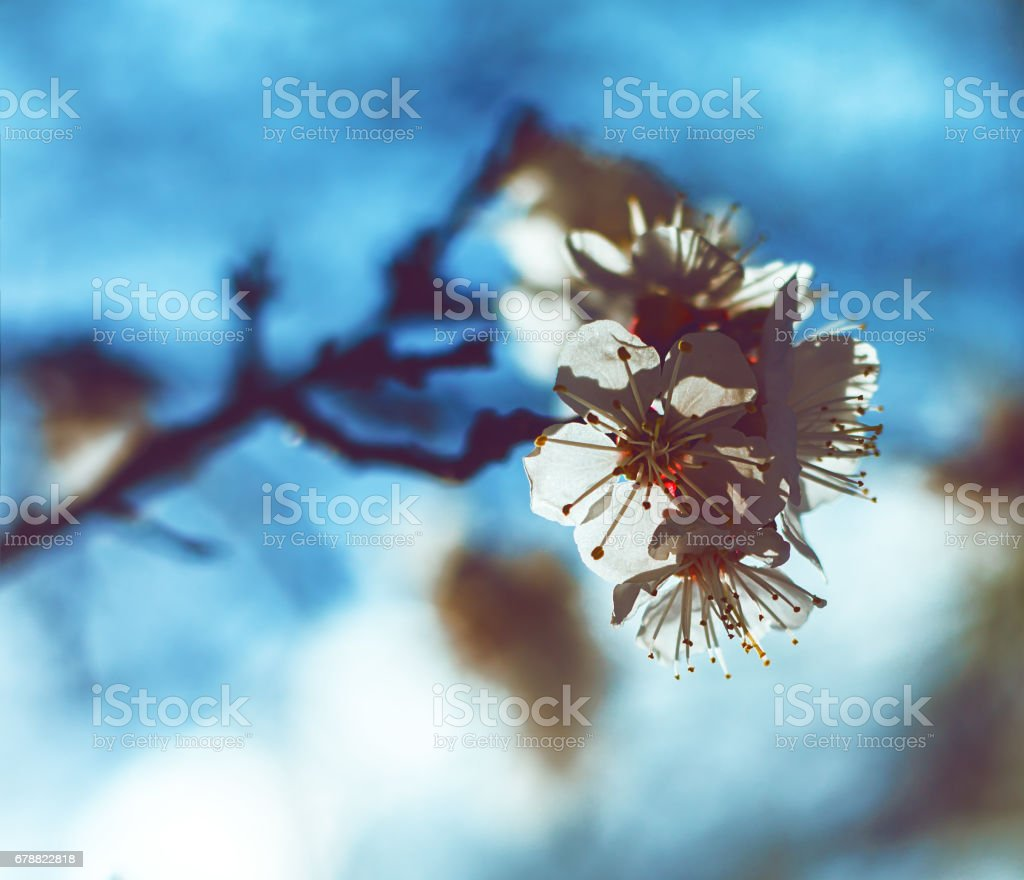 Blooming garden. Close-up flowers on tree against blue sky. Spring concept photo libre de droits