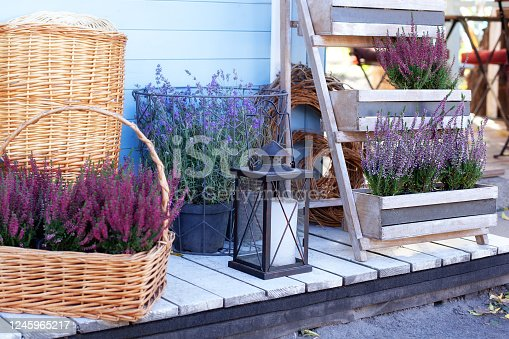 istock Blooming heather Calluna vulgaris and lamp with a candle in backyard in summer. Decor terrace of countryhouse. Gardening concept. Ornamental garden flowering plant in garden. Rustic. Lavender in pots 1245965217