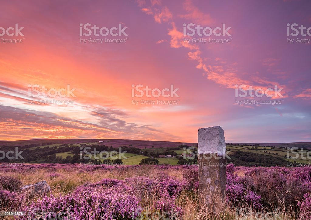 Blooming heather on the North Yorkshire Moors stock photo