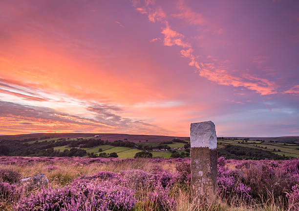 Blooming heather on the North Yorkshire Moors At the height of summer the sun sets over the blooming heather on the North Yorkshire Moors moor stock pictures, royalty-free photos & images