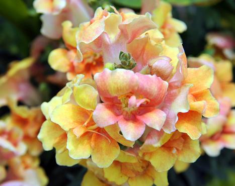 Bloei In De Tuin Stockfoto en meer beelden van Bloem - Plant
