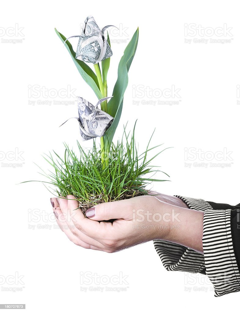 Blooming investment royalty-free stock photo
