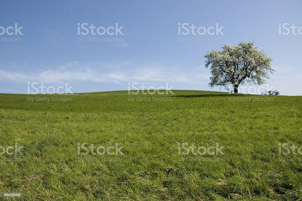 blooming landscape royalty-free stock photo