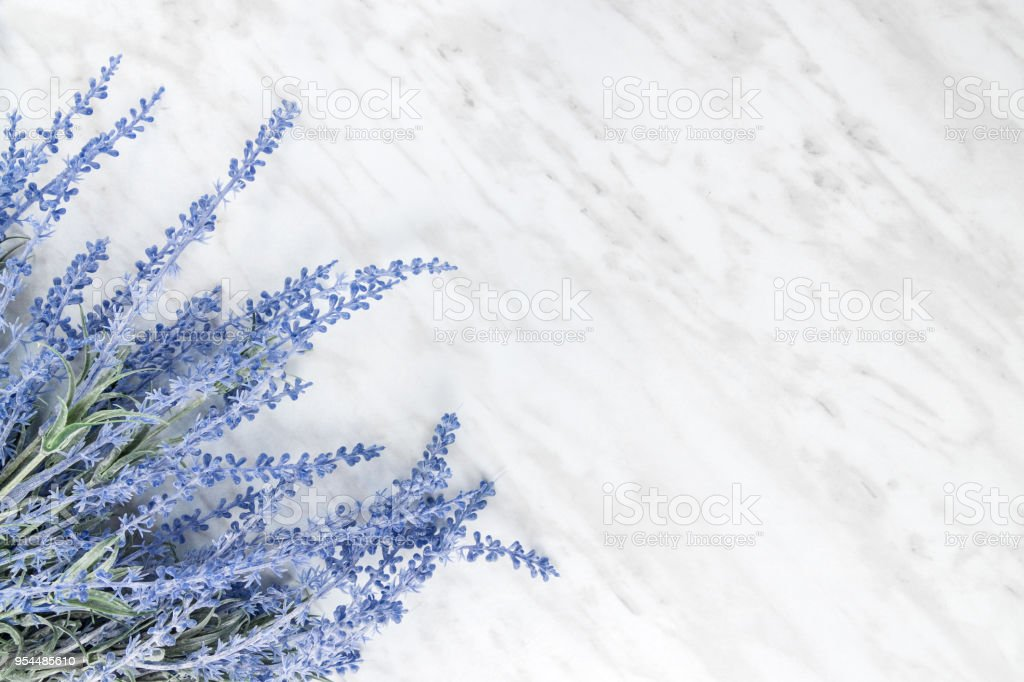 Blooming lavender on marble background with copy space stock photo