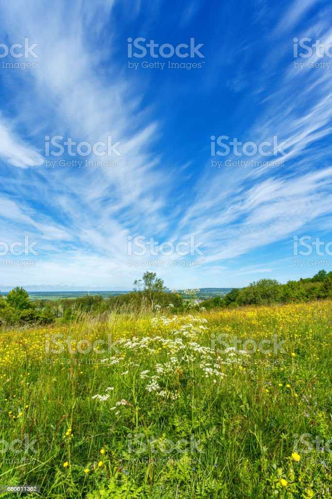 Blooming meadow flowers and a landscape view royalty-free stock photo