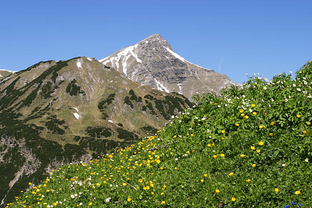 blooming meadow in the alps stock photo
