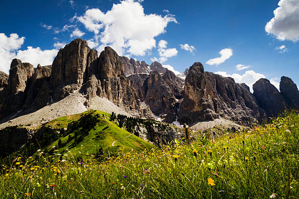 Blooming meadow in the Dolomites stock photo