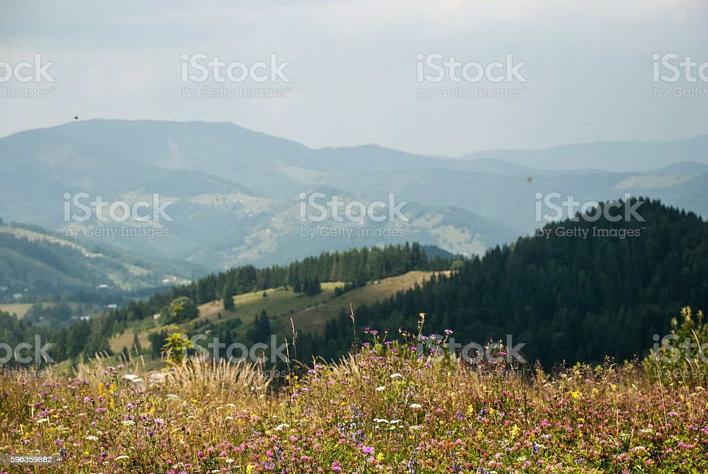 Blooming meadow on a background of mountains royalty-free stock photo