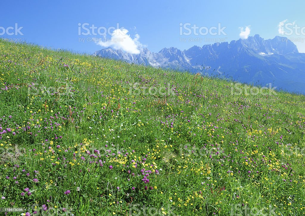 Blooming meadow royalty-free stock photo