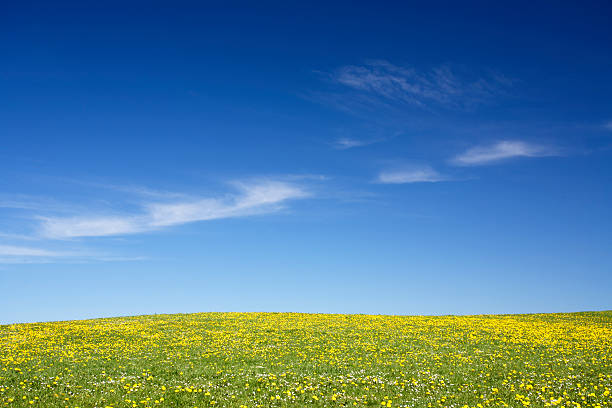 blooming meadow stock photo