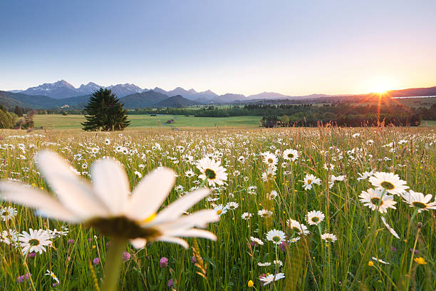 Blühende Wiesen, bayerische ostallgäu, Bayern, Deutschland, Blick auf die Alpen – Foto