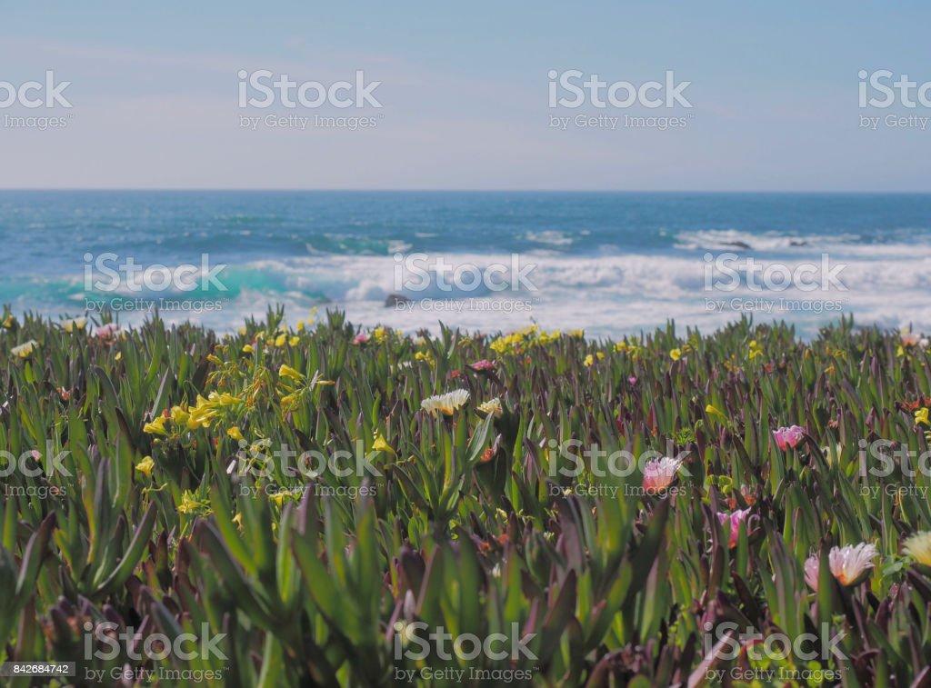 Blooming Ocean stock photo