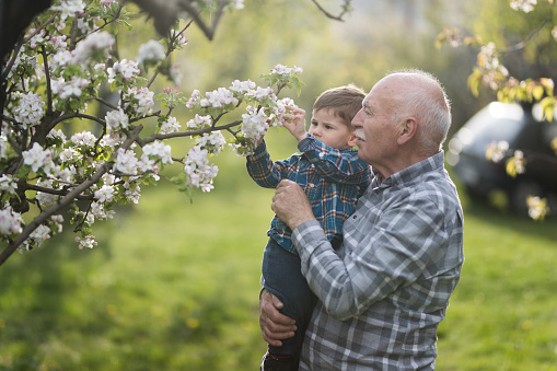 Grandfather holding his grandson and they are smelling blooming garden