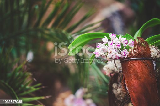 Blooming orchid flower on wooden trunk