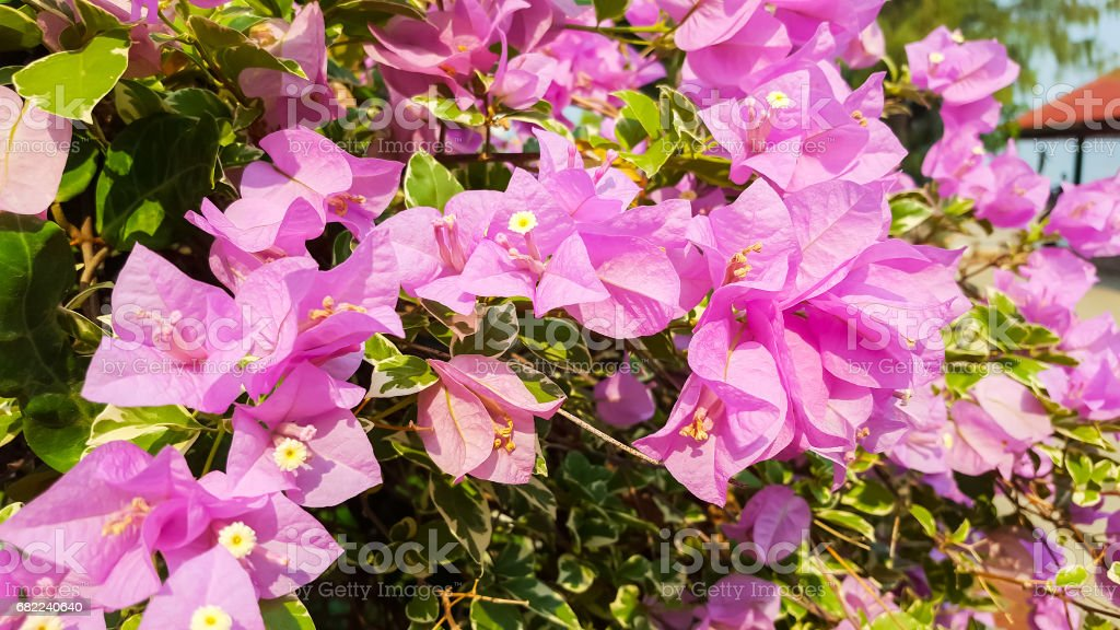 Blooming paper flower stock photo more pictures of backgrounds blooming paper flower royalty free stock photo mightylinksfo