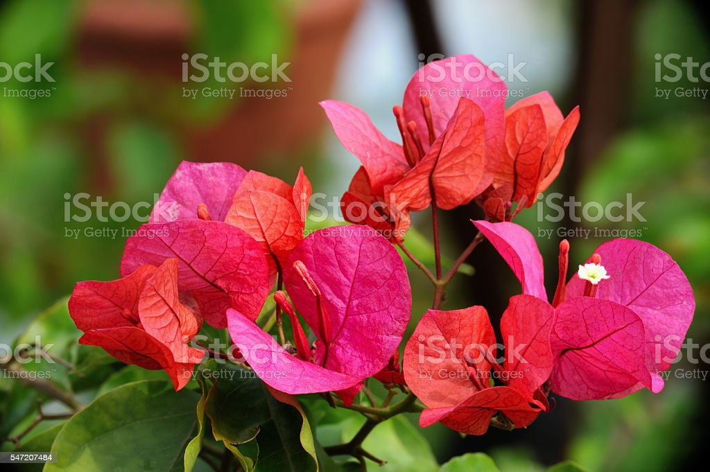 Blooming paper flowers stock photo