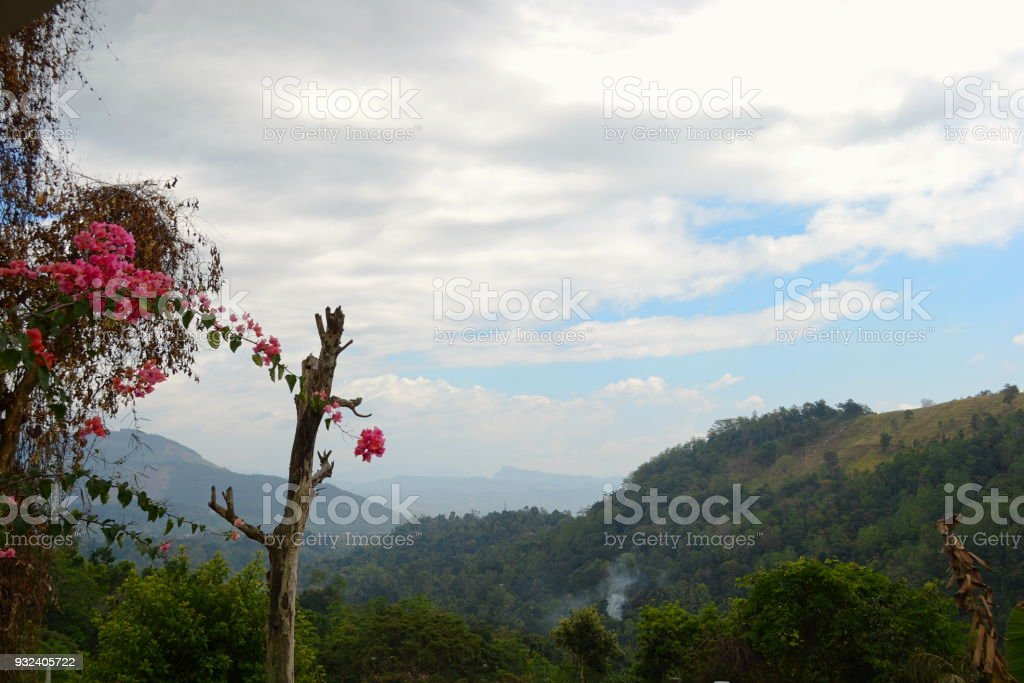 Blooming pink flowers and mountains stock photo