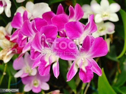 Orchid, Flower, Cymbidium, Flower Head, Petal