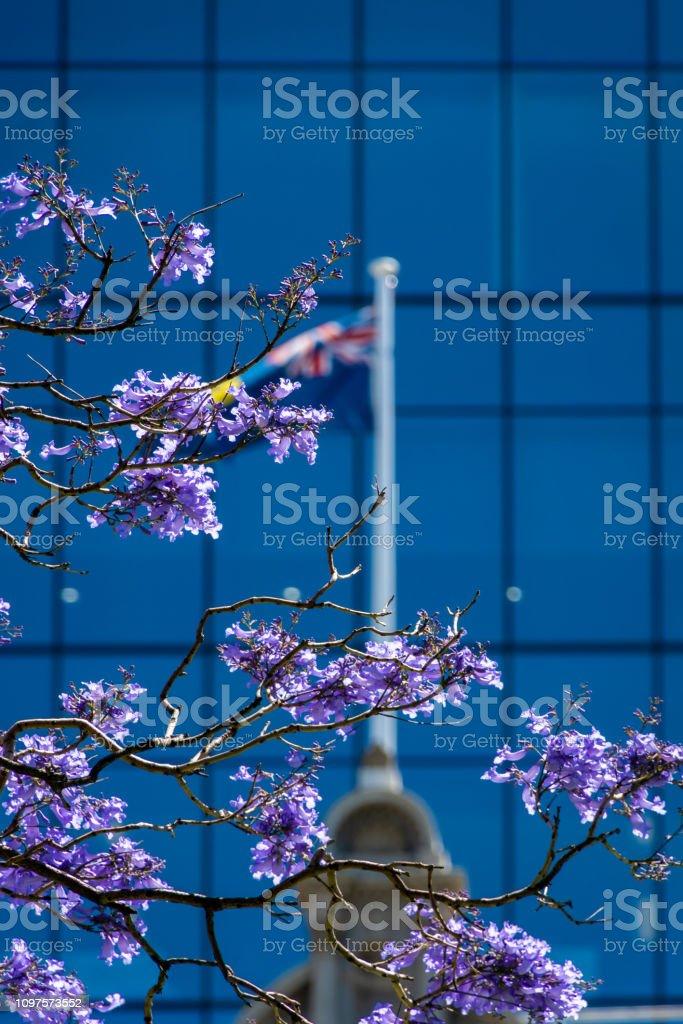 Florescendo árvore roxa em St Geourges Terrace em Perth Western Australia, à frente da bandeira australiana - foto de acervo