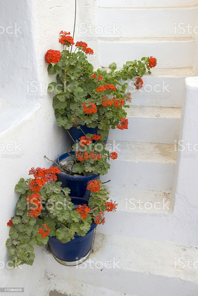 Blooming red geraniums on the steps royalty-free stock photo