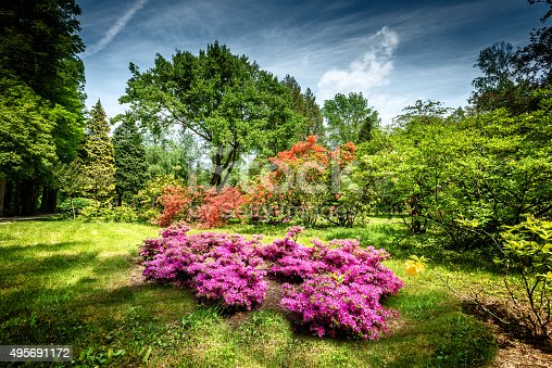 Blooming rhododendron garden/file_thumbview/75345621/1