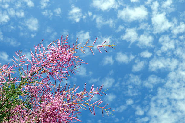 Blooming sky stock photo