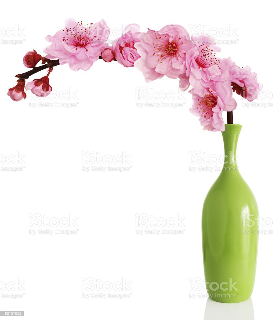 Blooming spring cherry branch in vase stock photo