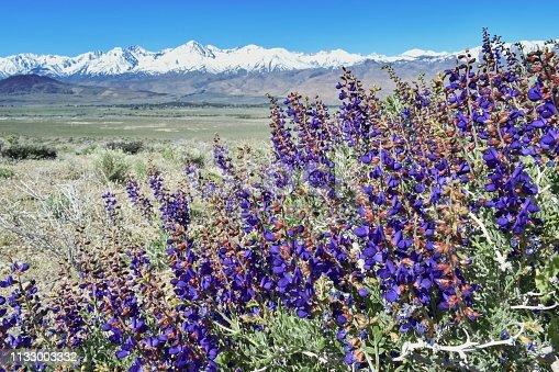 Sierra Nevada mountains and Mount Whitney, California, USA in springtime