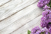 istock blooming spring lilac flowers on a white wooden background 1202671766
