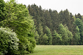 tree in the meadow (168) panorama format