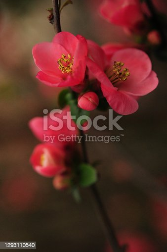 Flower blossom spring time