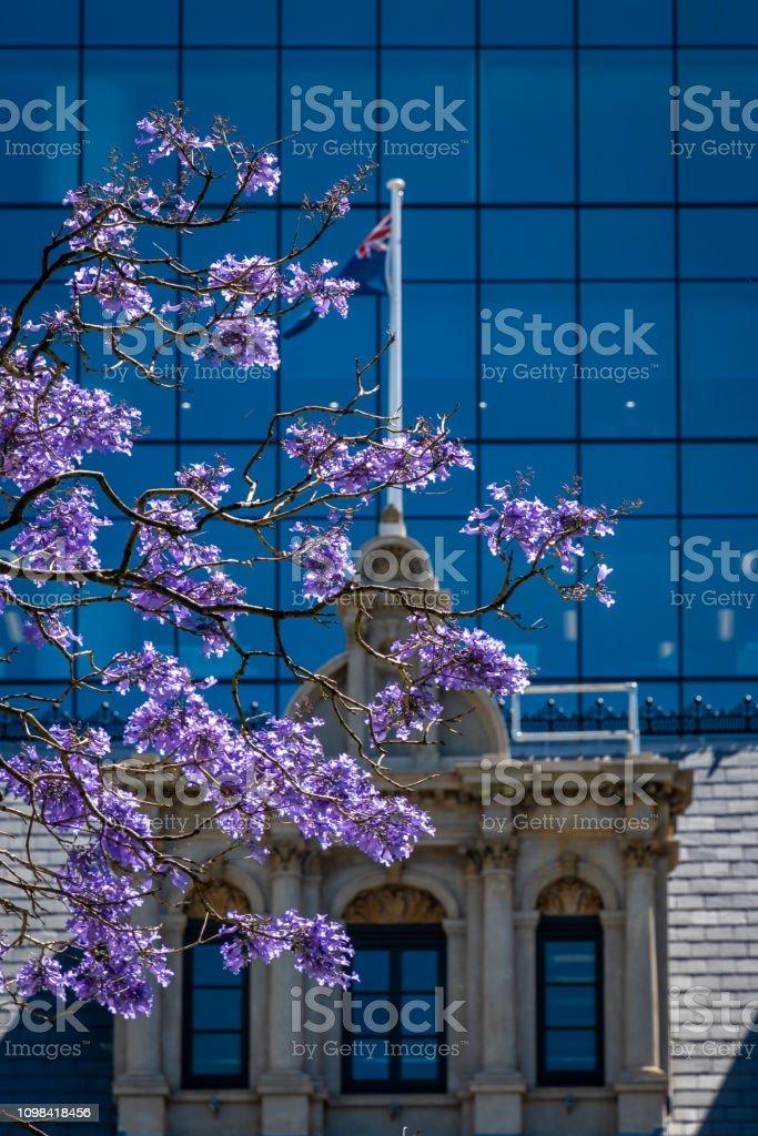 Árvore floresce em St Geourges Terrace em Perth Western Australia, à frente da bandeira australiana - foto de acervo