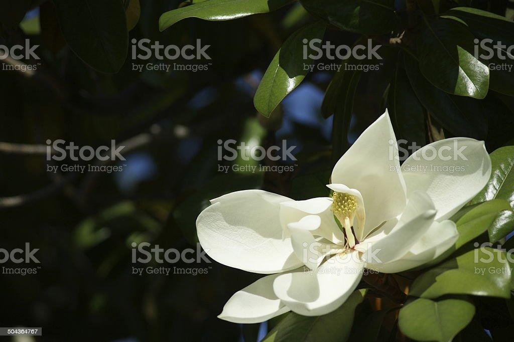 Blooming tree flower stock photo