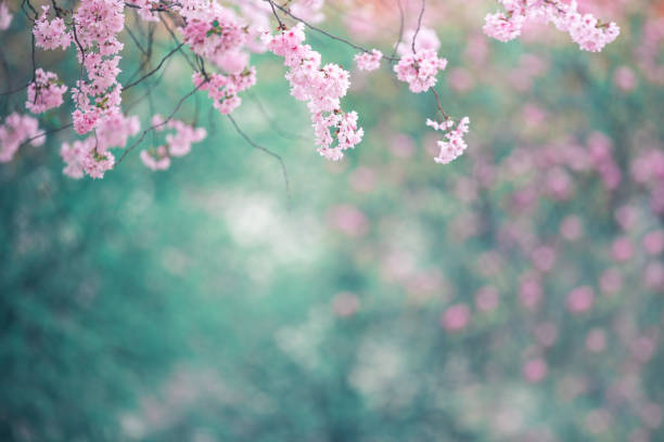 Blooming Tree In Spring stock photo
